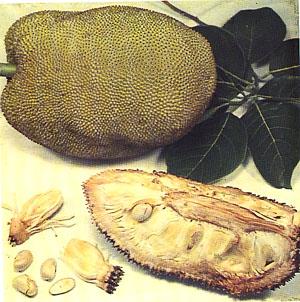Jackfruits